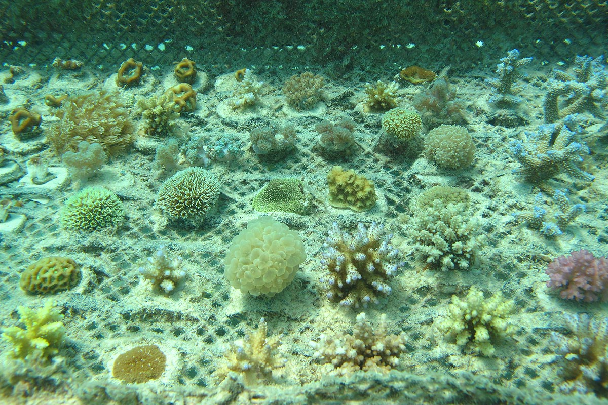 overview of some of our cultivated corals